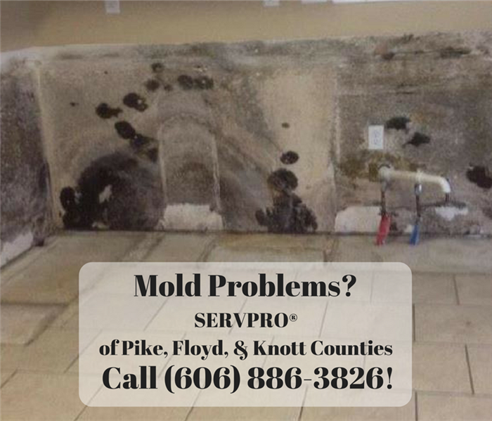 Mold Remediation Mold Problems are no problem for SERVPRO® of Pike, Floyd, & Knott Counties!